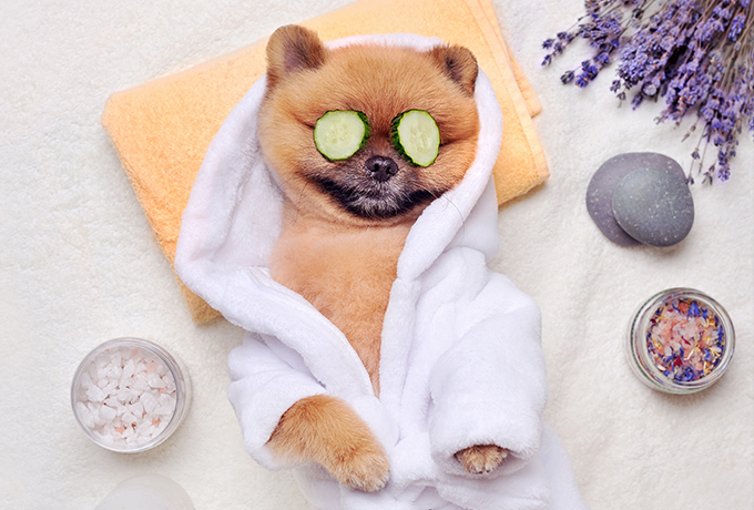 Pampered pooches!