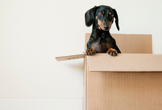 UK sees more property moves than ever during the pandemic